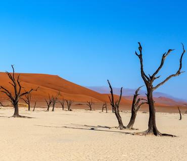 Parco del Namib