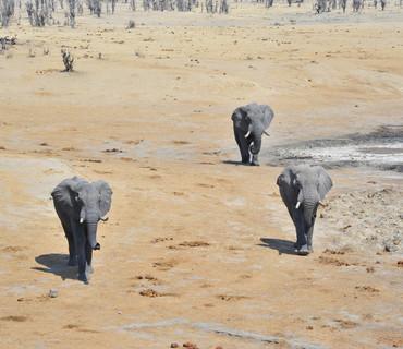 Parco Chobe