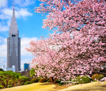 Tokyo - Gyoen Park Shinjuku